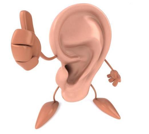 Znalezione obrazy dla zapytania słuch